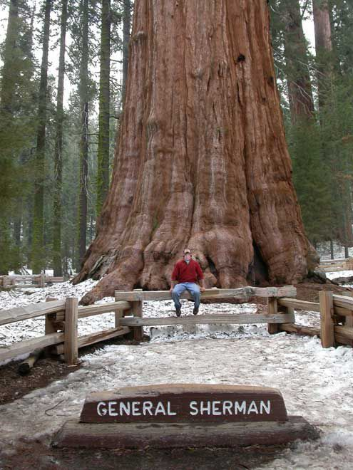 SEQUOIA GENERAL SHERMAN